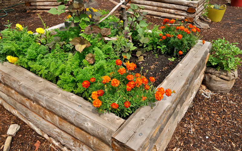 raised-wooden-plant-beds-05