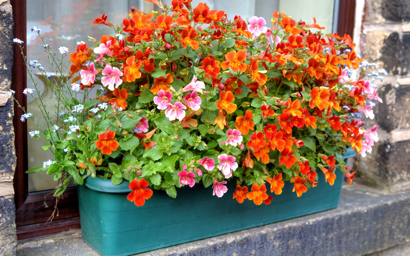 fall-window-boxes-01sm