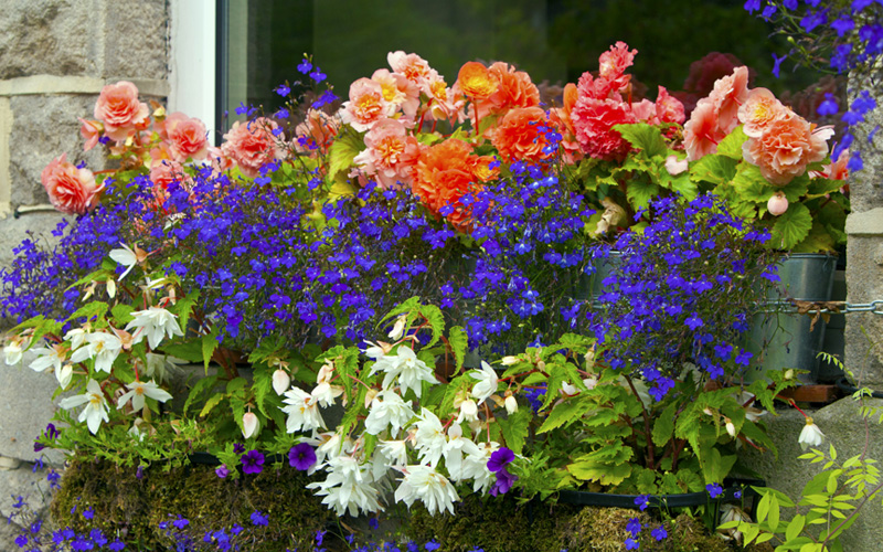 fall-window-boxes-02sm