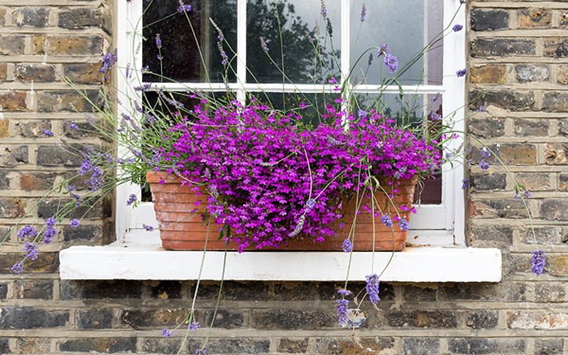 fall-window-boxes-03sm