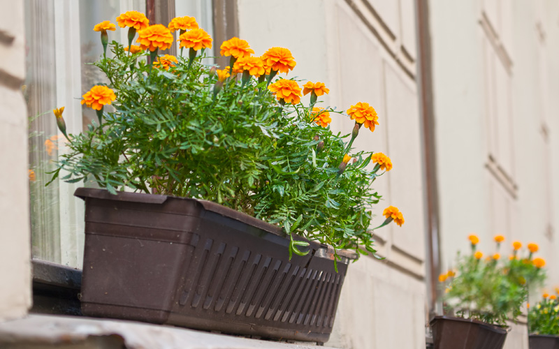 fall-window-boxes-04sm