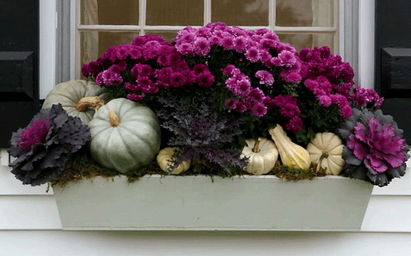 fall-window-boxes-12sm