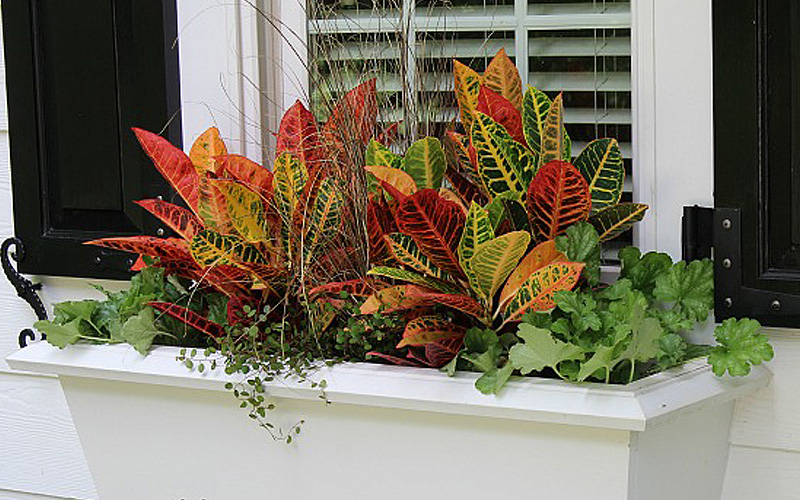 fall-window-boxes-14sm