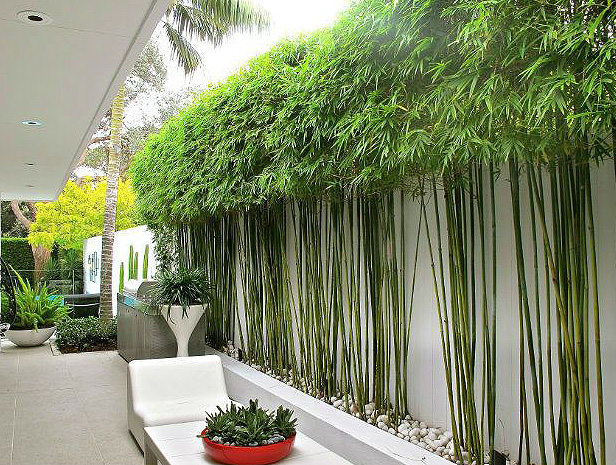 10 bamboo landscaping ideas