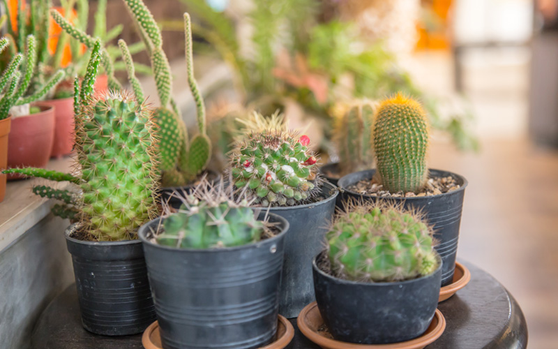 15 Cactus Garden Ideas Photos Garden Lovers Club