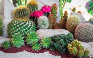 15 Cactus Garden Ideas (Photos)