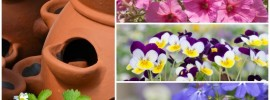 18 Plants That Grow Great in Strawberry Jars