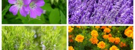 10 Fragrant Plants That Repel Mosquitoes