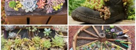 15 Unique and Creative Succulent Planter Ideas