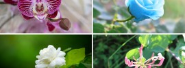 10 Lucky Plants For your Home and Garden