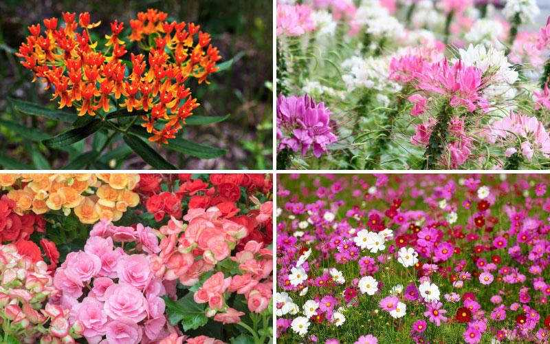 15 Low Maintenance Flowers You Can T Kill Garden Lovers Club