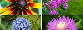 20 Flowers That Will Attract Butterflies to Your Garden