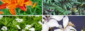 10 Plants for Wet Areas (Moisture Loving Plants)