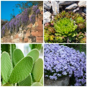 10 Plants That Grow on Rocks