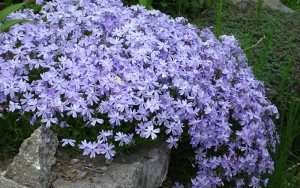 10 Best Plants for Erosion Control