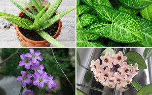 18 Best Houseplants for Beginners (Easy to Grow)