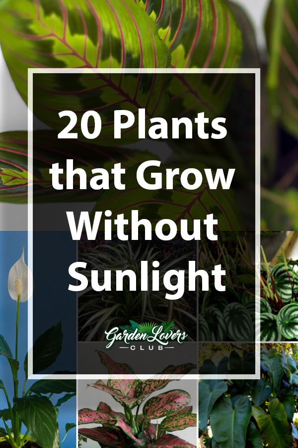 20 Plants That Grow Without Sunlight Garden Lovers Club