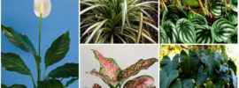 20 Plants that Grow Without Sunlight