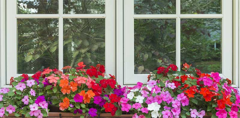 10 Best Flowers For Window Boxes In Shade Garden Lovers Club
