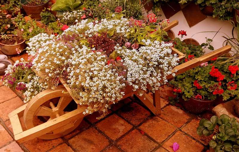 Wooden Wildflowers