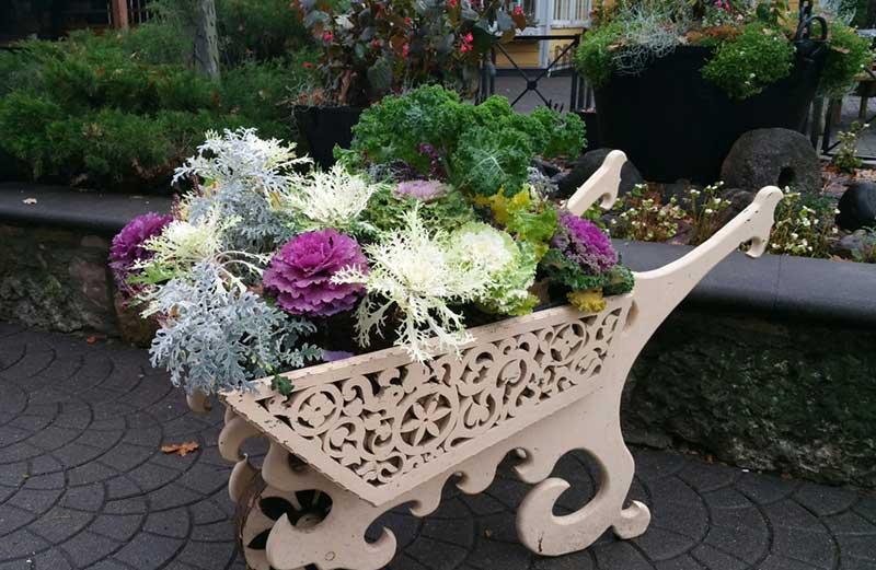 cabbage wheelbarrow planter