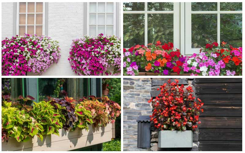 Garden Lovers Club & 10 Best Flowers for Window Boxes in Shade - Garden Lovers Club
