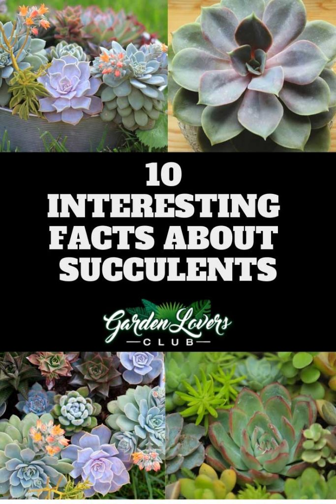 succulent facts