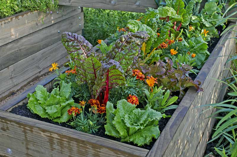 raised beds urban