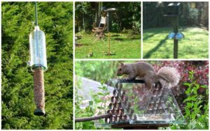 10 Brilliant DIY Squirrel-Proof Bird Feeder Ideas