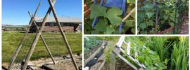 Clever DIY Cucumber Trellis Ideas