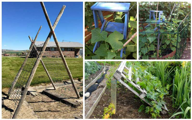 DIY Cucumber trellis ideas