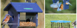Best Bluebird Feeders 2019 (Buying Guide)