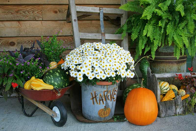 harvest container