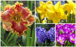 15 Bulbs to Plant This Fall for Spring Blooms