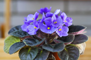 26 Cat-Friendly Plants to Grow Indoors