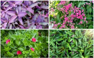 16 Perfect Florida Ground Cover Plants