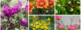 15 Florida Drought-Tolerant Plants (Photos)