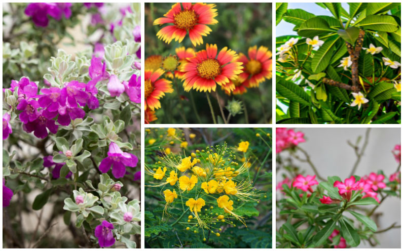 Florida Drought-Tolerant Plants