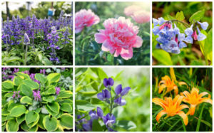 Best Plants for Morning Shade and Afternoon Sun