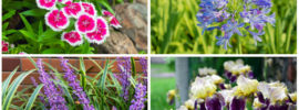 10 Best Plants for Dry Soil