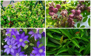 10 Best Plants for Fence Lines