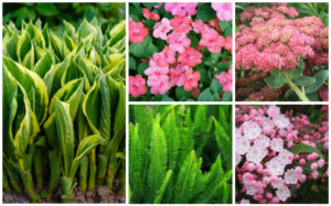 15 Best Plants for Under Trees