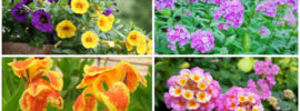 10 Best Plants for Planter Boxes in Full Sun