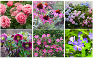 13 Best Plants for Steep Slopes