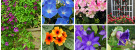 12 Best Plants for Your Trellis (Photos)