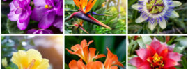 30 Gorgeous Tropical Flowers (Photos)