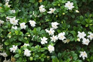 15 Best Plants for Hedges in Florida
