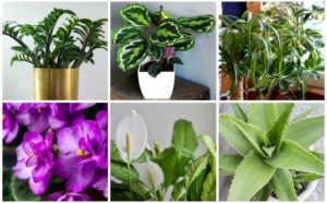 17 Best Houseplants for Kitchens