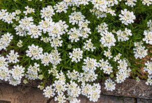15 Best Cascading Plants for Retaining Walls