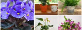 12 Best Houseplants for Medium Light